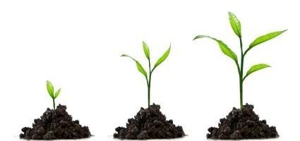 Eerste hulp bij groeien